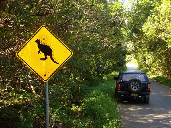 Australia Kangoroo Off road trip